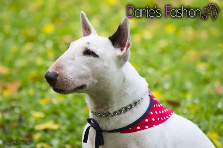 Pöttyös kutyakendő http://daniesfashion.com/