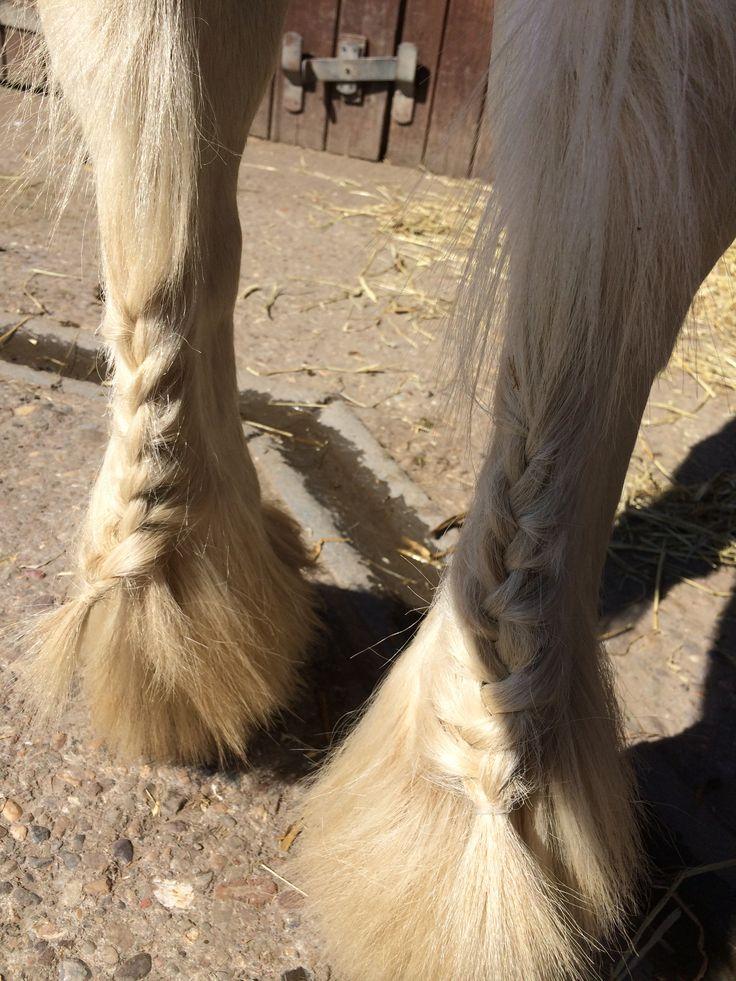 French plaited feathers #hairandbeauty #horse