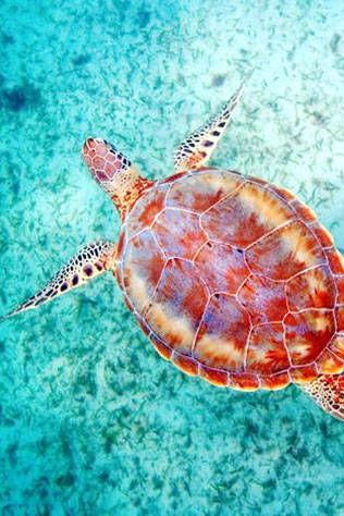 Sea turtle in Maui - The Top Travel Destinations Across The World - Best Places To Travel - Harpers BAZAAR Magazine OH #travel #beach