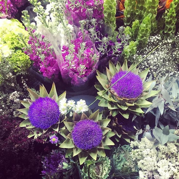 Flor de alcachofa #df #mexico #twitteracc #floreria #flores #alcachofa #cdmx