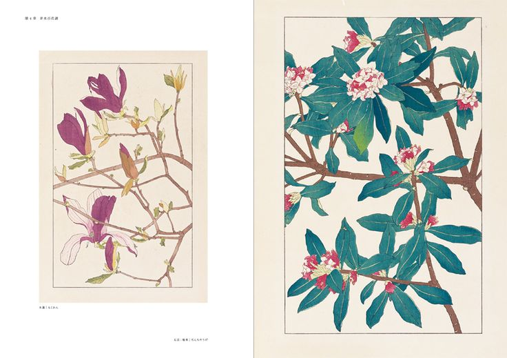 Hisui Sugiura: One hundred botanical flower drawings (1920-1922).