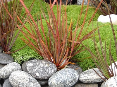 Scleranthus Biflorus: H 15cm x W 75cm. Full sun. Requires good drainage. Hardy.
