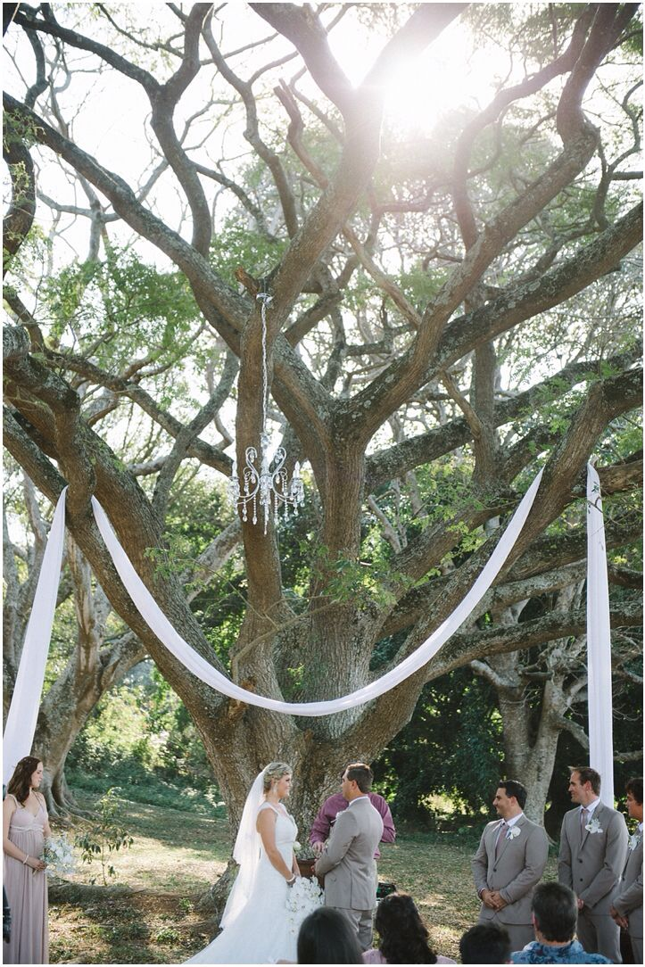 I saw this tree years ago and dreamed of getting married under it with a dainty chandelier | Eagles Cry Wedding Venue KZN