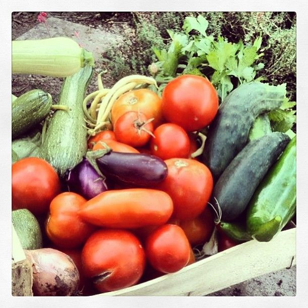 #vegetables #verdure #colori #vistochebuono