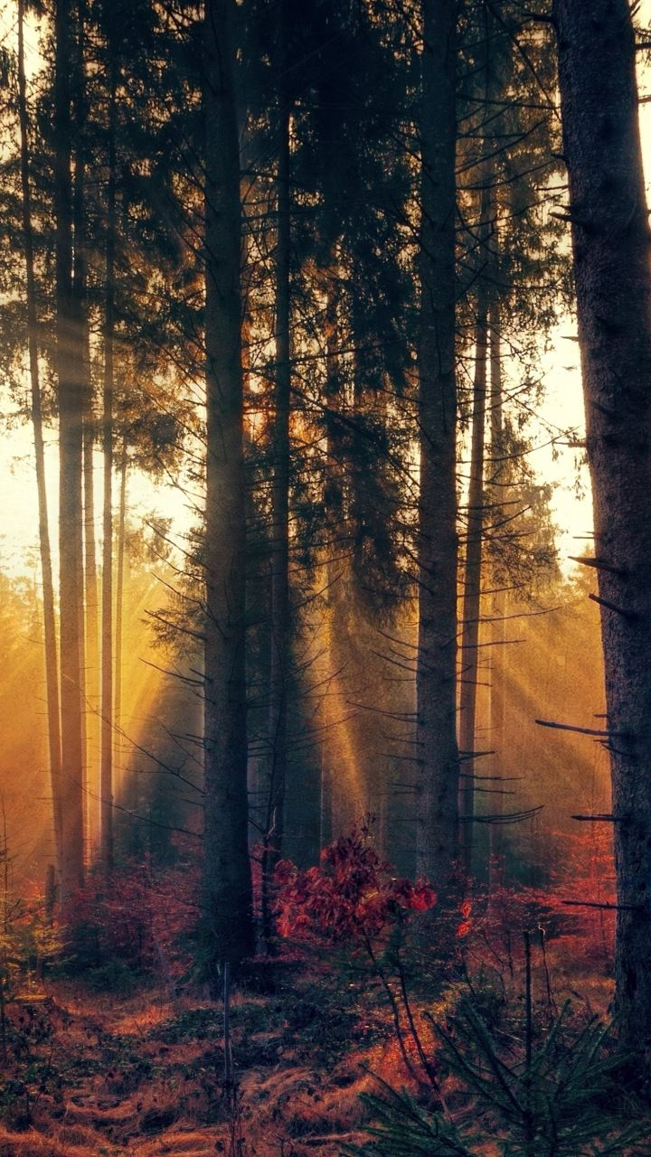 forest, trees, sunbeams, nature, 720x1280 wallpaper natureforest, trees, sunbeams, nature, 720x1280 wallpaper