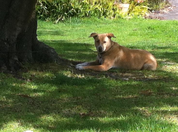 Lazy sunny day. www.thedogline.com.au