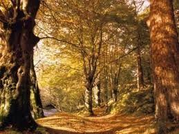 """Képtalálat a következőre: """"erdők"""""""