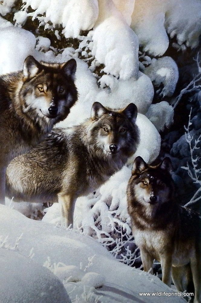 """In artist Carl Brenders' print THE LONG DISTANCE HUNTERS the beauty of a wolf pack stands in sharp contrast to the harsh winter conditions in which they must hunt. Carl Brenders says: """"Once in his lif                                                                                                                                                      More"""