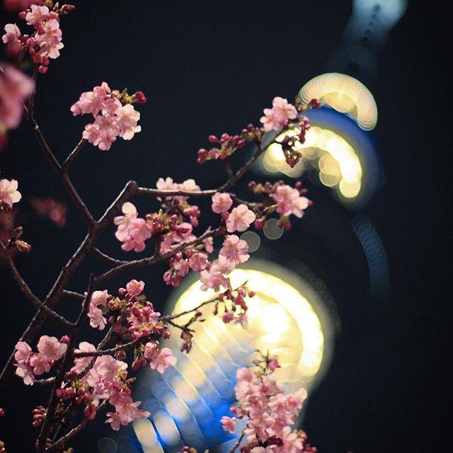 【s60_pinky】さんのInstagramをピンしています。 《場所によってはもう満開のところもあるみたいですね🌸  街歩いててもちらほらと咲いてて 毎回一眼持って来ればよかったと後悔😩  #canon#eoskissx7i#キャノン#キヤノン#canonphotography#eos#like4like#photography#photographer#japan#justgoshoot#ファインダー越しの私の世界#写真好きな人と繋がりたい#写真撮ってる人と繋がりたい#写真部#一眼レフ#カメラ好きな人と繋がりたい#東京カメラ部#スカイツリー#skytree #春#tokyo#桜》