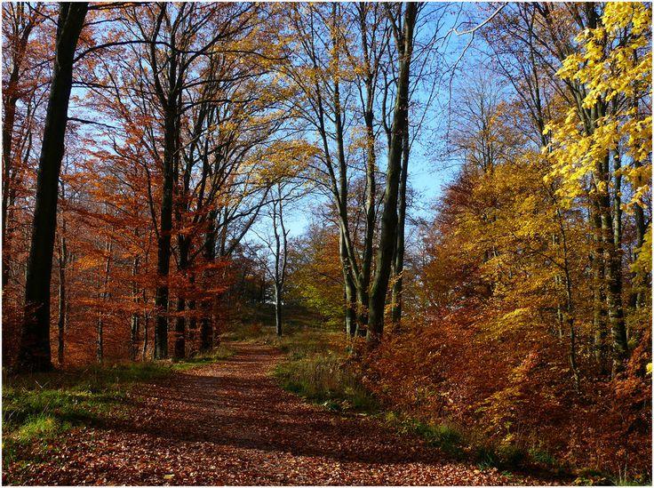 Rennsteig, Thüringer Wald, Thuringia, Germany