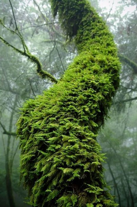 This is what I imagine the color green looks like in the pacific northwest...can't wait to see it for myself!