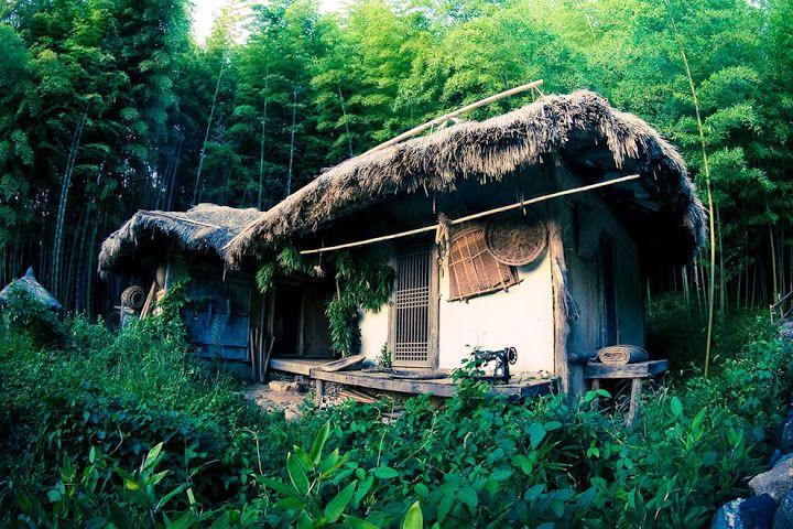 Бамбуковый чай южная корея
