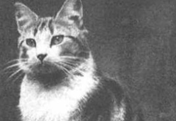"""Faith, church cat at Saint Augustine's Church, London. On September 6, 1940, Faith moved her single newborn kitten, Panda, from the warm upper floors of the church to the basement, just before the Germans began bombing the city. She and Panda were later rescued from the rubble by Father Henry Ross, and Faith was awarded a special medal for """"steadfast courage in the Battle of London""""."""