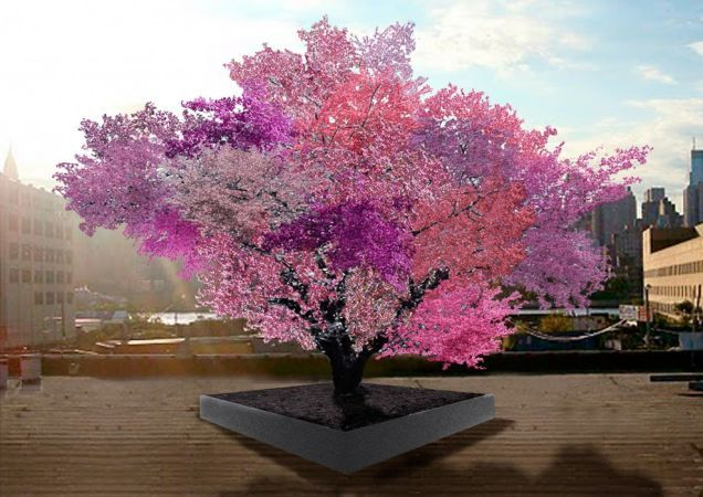 This Tree Is Growing 40 Different Kinds Of Fruit At Once (Image: Sam Van Aken.) This single (and quite colorfully blossoming) tree grows 40 different varieties of peaches, plums, apricots, nectarines, cherries, and even almonds — but just how does it do it? It does it through the process of chip grafting.