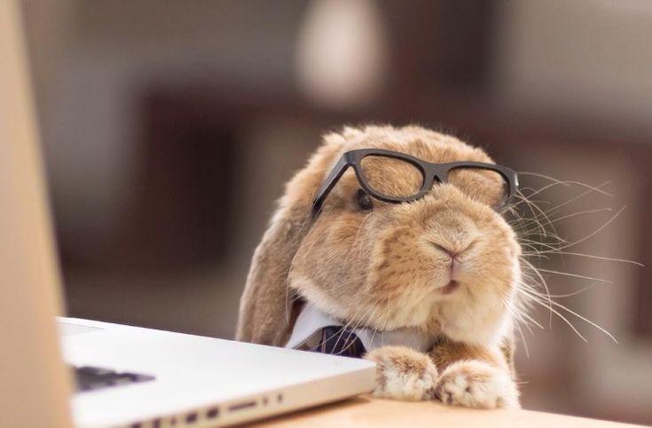 Un conejo fashion en Japón