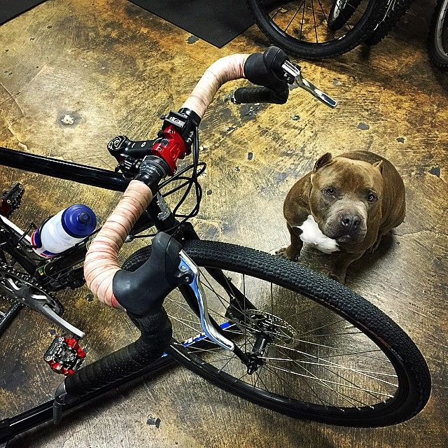 Ta'Pac with the dialed-in #Raleigh #TouringRig belonging to his owner, @christopher_encina_cmt . Check out that sexy #bacon #BarTape. Not pictured: Ta'Pac's matching I ❤️ BACON collar! via Instagram http://ift.tt/16Wd5Sp