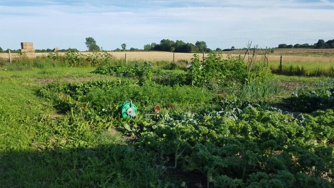 The kitchen patch year one - 2015