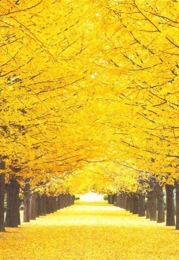 20 Aesthetic Yellow Wallpaper Landscape In 2020 Landscape Photography Autumn Scenery Nature Pictures