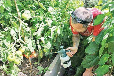 Les bienfaits de la levure chimique sur vos plantes et les fleurs de votre…