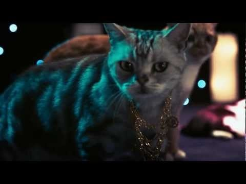 "Sit back and enjoy the bumpin' beats  of Walter and the Lap Cats' new music video, ""Me Luvz Mahselfz"" brought to you by Litter Genie. - http://nib.ly/gxd4"