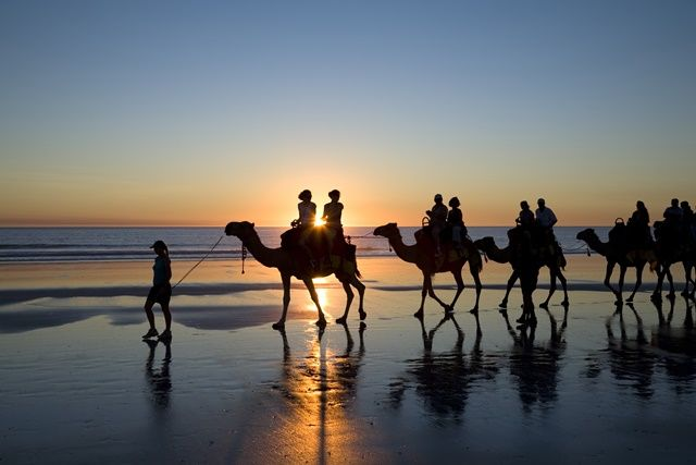 The camels of Cable Beach, Broome.   What an amazing experience!