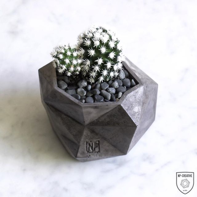 Arizona Snowcap in our Geo Planter. This planter will be available online in the next few months! #minimalism #design #interior #polished #natural #buylocal #nordicinspiration #australianmade #australia #perth #handmade #style #urbangardening #concretelove #todayslovely  #gardening #homewares #concrete #scandistyle #concretedesign  #geometric #natural #startup #castconcrete #perthcreatives #concreteplanter #concretelove #succulent #cactus #cactuslover