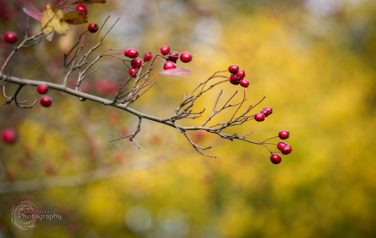 Colours of Autumn - Colours of Autumn