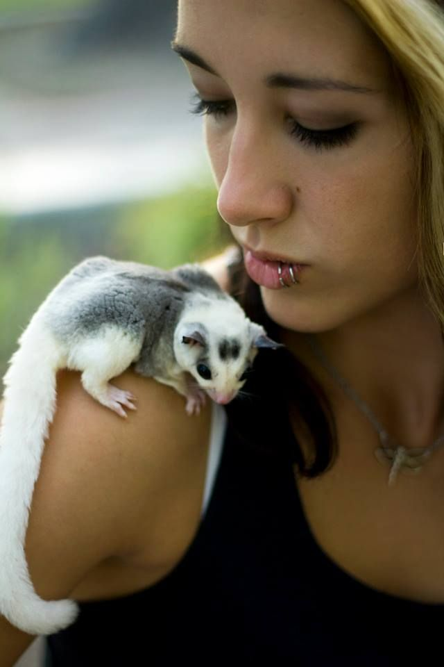 57 Best My Sugar Glider Babies Images On Pinterest Sugar