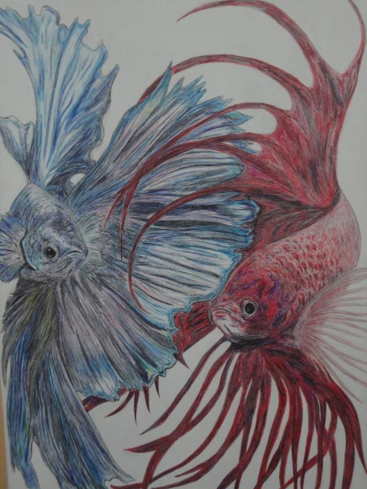 1000+ images about Jess on Pinterest | Polymers ... Betta Fish Drawings