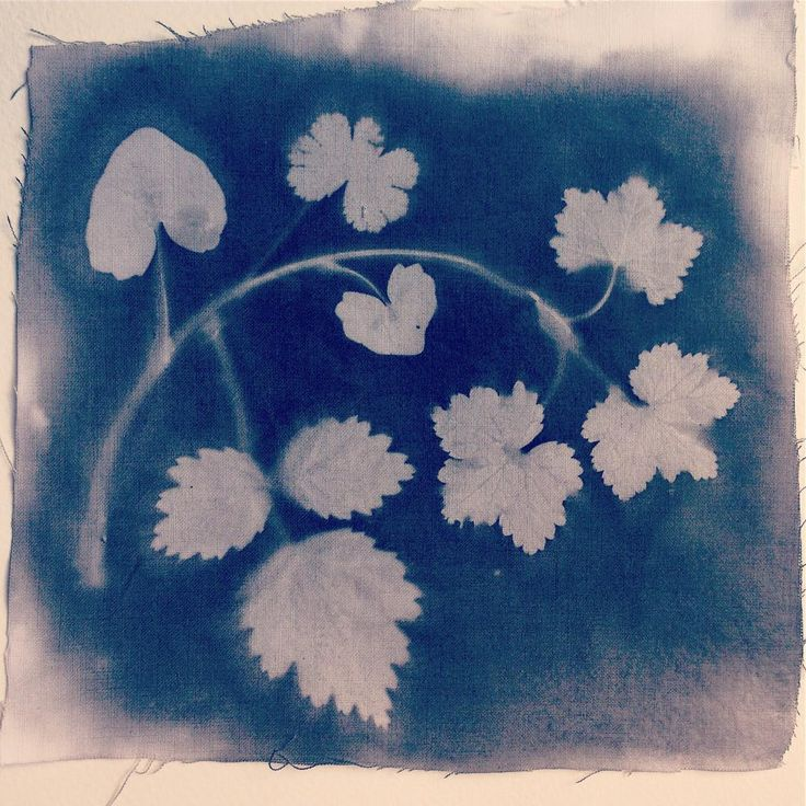 #sunprint made with various leaves from my garden on fabric with #dyenaflow #textilepaint. Day 7 of the #100daysofbotanicalcollages #the100dayproject