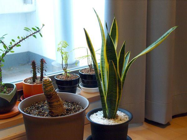 Acclimatizing tropical plants for winter - http://za.keter.com/554933