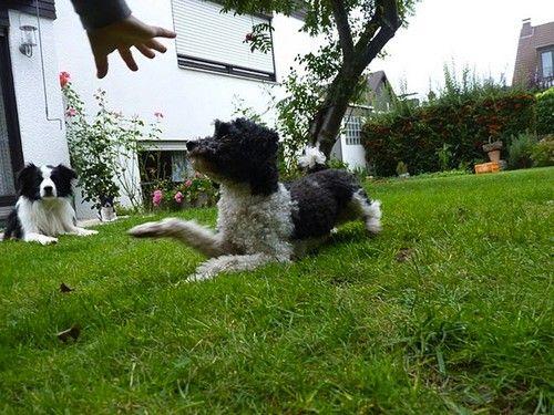 Hundetrick: Kriechen
