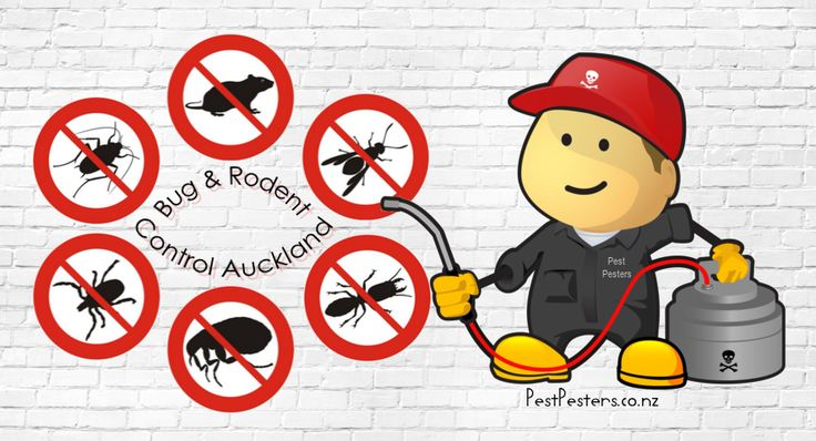Bug and Rodent Control Service in Auckland. #pestcontrol #pesticides #Auckland