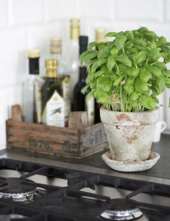 Fesleğen hem iç hem de dış mekan bitkisi olarak yetiştirilmesi en kolay bitkilerden biridir. Üstelik yemekleriniz ve salatalarınız için ...