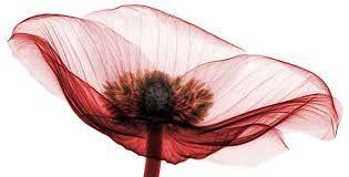 Resultado de imagen para xray flower