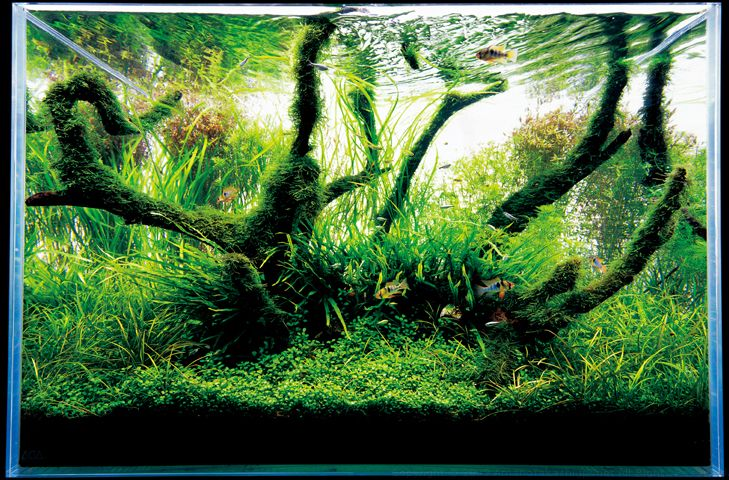 Japanese Aquarium Design The Best Aquarium Terrarium