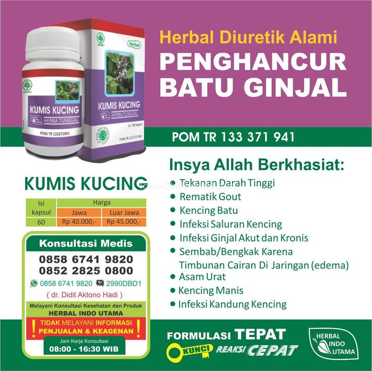 Obat Herbal Kumis Kucing Herbal Indo Utama