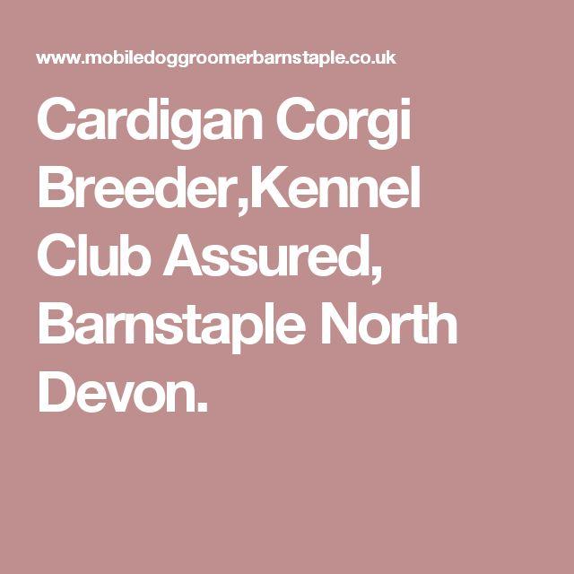 Cardigan Corgi Breeder,Kennel Club Assured, Barnstaple North Devon.