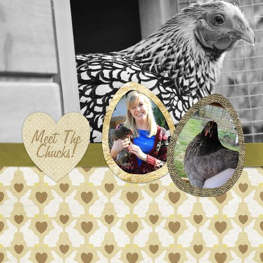 Charlotte Cooper (one of our designers) and her famous chickens!   'The Chucks!, a project by coopers_fleurs'