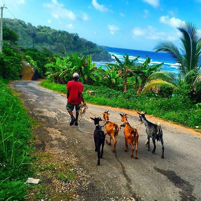 155 Best Images About Jamaica Fundraising On Pinterest