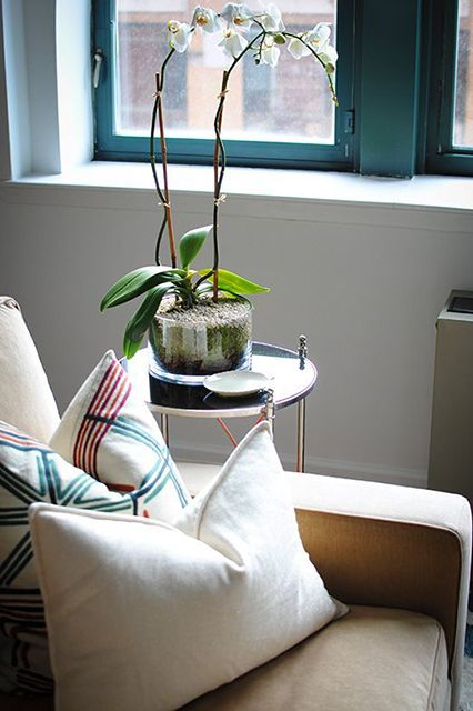 """If you don't care about how your plants feel, be prepared to primp and replace often.  You may have noticed there's a huge succulent trend going on for the past, like 14 years or so. You'll go over to a friend's house and see a lovely little Jade plant brightening up a dark hallway and think """"Oh, well they put it there and it looks fine, so can I!""""    Don't believe these lies. ..."""