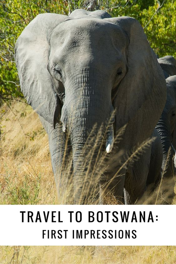 What's it like to travel to Botswana? 10 eye-opening observations about people, focus on conservation & wildlife, Kalahari Desert, Okavango Delta and more.