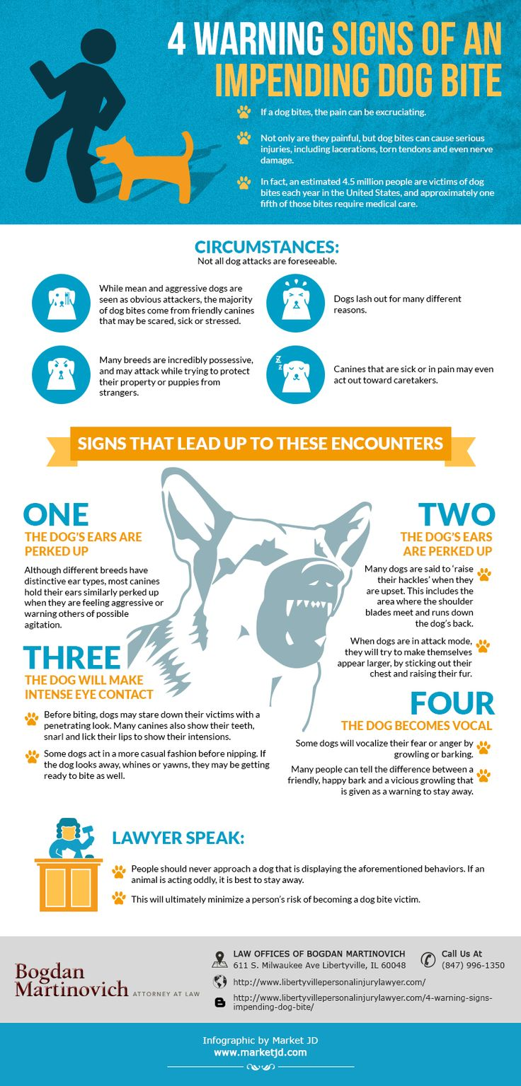 While mean and aggressive dogs are seen as obious attackers, the majority of dogs bites come from friendly canines that may be scared, sick or stressed. For more details visit: