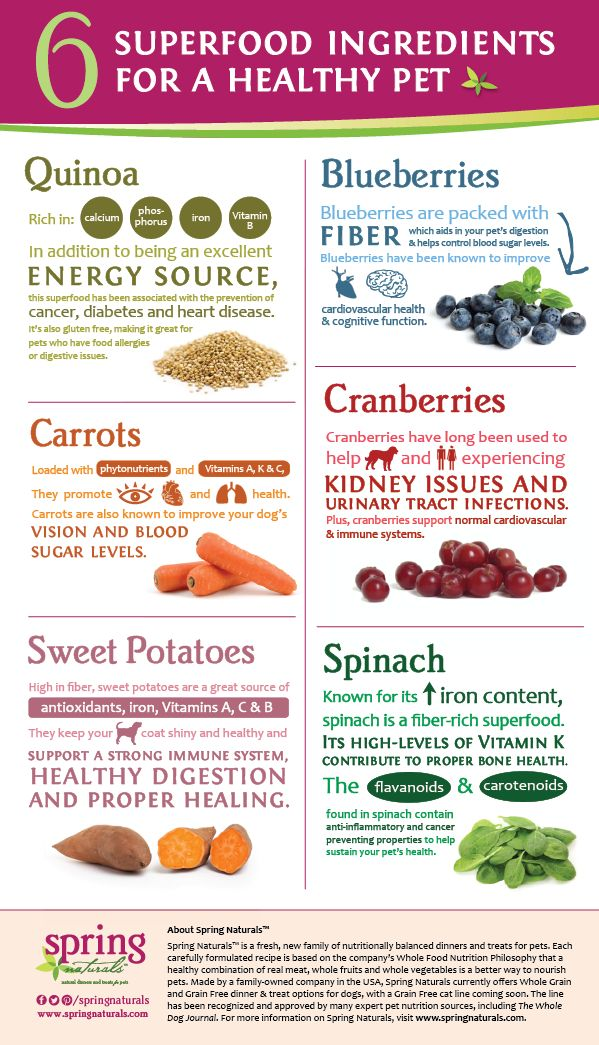 6 Superfood Ingredients for a Healthy Pet - from @Karen Naturals