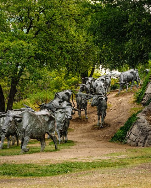 DFW - Pioneer Plaza Cattle Drive Bronze Statues by Robert Summers, Dallas, Texas