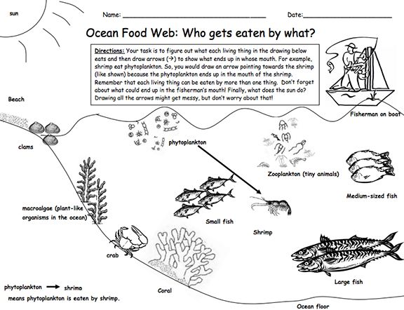 Here's a lesson and materials on a marine food web.