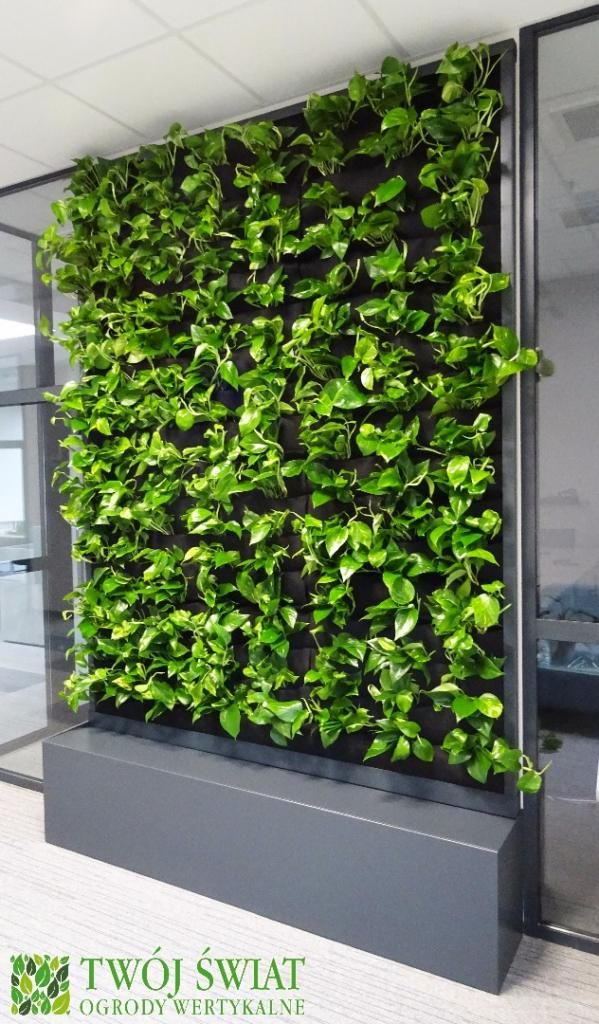 Mobilna zielona ściana obsadzona wyłącznie Epipremnum.
