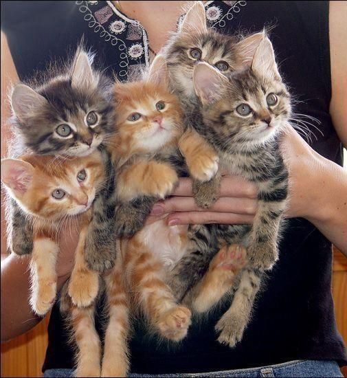"""A previous pinner wrote: """"oh my goodness! who doesn't want an armful of adorable kittens?"""""""
