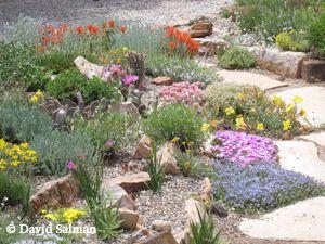 130 best images about Rock garden on Pinterest Kangaroo