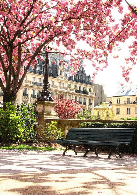 There is no place more beautiful than Paris in the SpringtimeCherries Blossoms, Benches, Parks, Beautiful, Paris France, Travel, Places, Spring, Cherry Blossoms